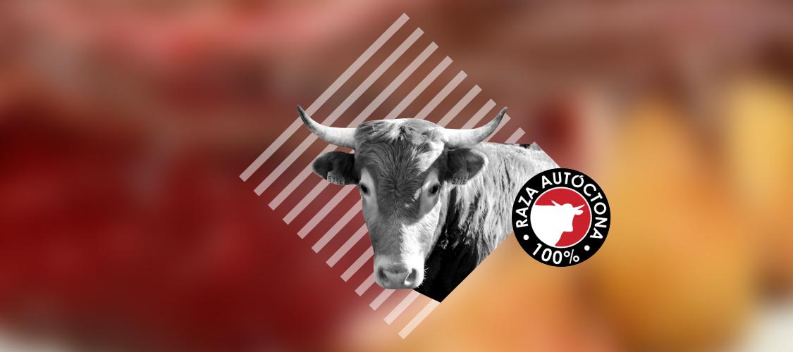 Jornadas Gastronómicas De Carne Betizu En Navarra